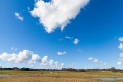 Paarden op Groen Grasrijk Gebied onder Heldere Blauwe Hemel Stock Afbeeldingen