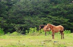 Paarden op groene weide stock foto's
