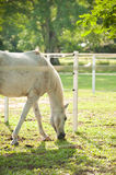 Paarden op het gebied Royalty-vrije Stock Afbeeldingen