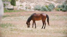Paarden op het gebied stock video