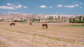 Paarden op het gebied stock videobeelden
