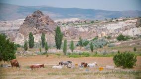 Paarden op het gebied stock footage