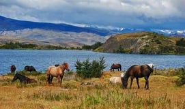 Paarden op het gras royalty-vrije stock fotografie