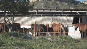 Paarden op het landbouwbedrijf stock footage