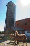 Paarden op het Landbouwbedrijf Stock Fotografie