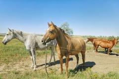 Paarden op het Platteland van Colorado royalty-vrije stock afbeeldingen