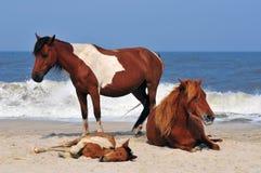 Paarden op het strand Stock Foto's