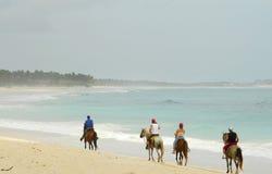 Paarden op het strand Stock Afbeelding