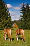 Paarden op het weiland royalty-vrije stock foto's