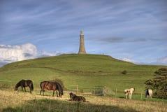 Paarden op Heuvel Hoad Royalty-vrije Stock Afbeelding