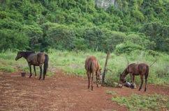 Paarden op Klein Landbouwbedrijf stock afbeelding