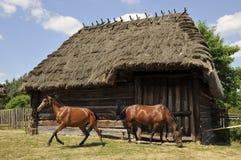 Paarden op landbouwbedrijf Stock Foto