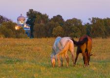 Paarden op medow royalty-vrije stock afbeeldingen