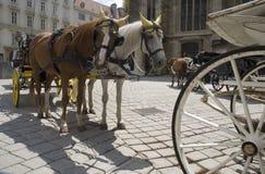 Paarden op Stephanplatz, Wenen Royalty-vrije Stock Foto
