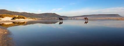 Paarden op Strand Stock Foto