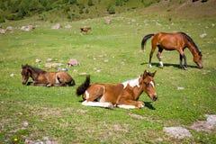 Paarden op Th-weiland Royalty-vrije Stock Afbeelding