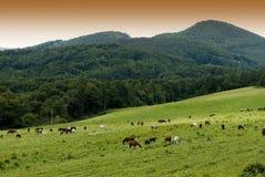 Paarden op weide Stock Foto's