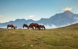 Paarden op weide Mist en bergen op de achtergrond Stock Afbeeldingen