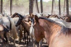 Paarden op weiland na een gang Royalty-vrije Stock Fotografie
