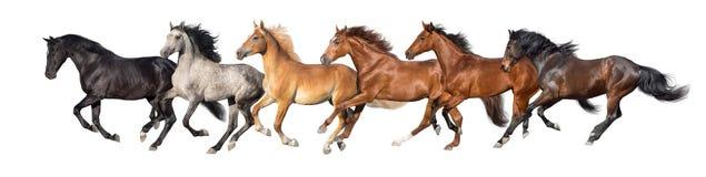 Paarden op wit worden geïsoleerd dat stock foto's