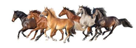 Paarden op wit worden geïsoleerd dat royalty-vrije stock foto's