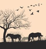 Paarden op Zonsondergangachtergrond Royalty-vrije Stock Afbeeldingen
