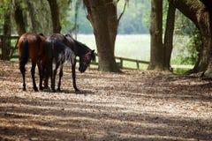 Paarden in platteland Stock Fotografie