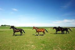 Paarden in platteland Royalty-vrije Stock Foto's