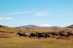 Paarden in prairie stock afbeelding