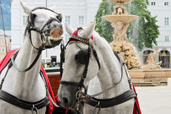Paarden in Salzburg royalty-vrije stock foto's