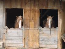 Paarden in Schuur Royalty-vrije Stock Foto
