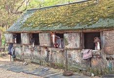 Paarden in Schuur met Mos op Dak Stock Afbeelding