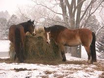 Paarden in sneeuw Royalty-vrije Stock Afbeeldingen
