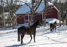 2017-02-10 paarden & Sneeuw Stock Afbeelding