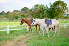 Paarden in stable#1 Royalty-vrije Stock Afbeelding