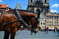 paarden tegen de Kerk van Onze Dame vóór Tyn Stock Afbeeldingen