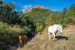 Paarden uit het hout Royalty-vrije Stock Foto