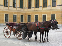 Paarden in uitrusting Royalty-vrije Stock Foto's