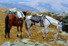 Paarden in uitrusting in de bergen met blauwe hemel Royalty-vrije Stock Afbeeldingen
