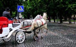 Paarden in vervoer Stock Foto