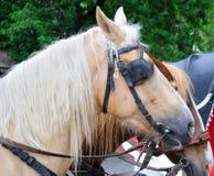 Paarden in vervoer Royalty-vrije Stock Foto's