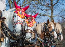 Paarden voor bussen stock afbeeldingen