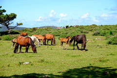 Paarden in vrijheid royalty-vrije stock afbeelding