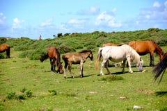 Paarden in vrijheid stock fotografie