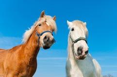 Paarden in weide Royalty-vrije Stock Fotografie