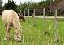 Paarden in weiland royalty-vrije stock foto's