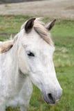 Paarden in Weiland Royalty-vrije Stock Afbeeldingen