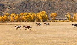 Paarden in Weiland Stock Foto