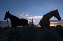 Paarden in weiland bij zonsondergang Royalty-vrije Stock Afbeeldingen