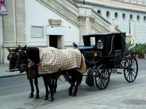 Paarden in Wenen Royalty-vrije Stock Afbeelding